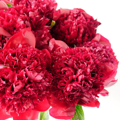 Direct from Farm Red Peonies