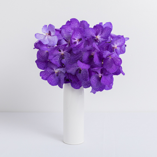 Farm Fresh Orchids Flower Delivery