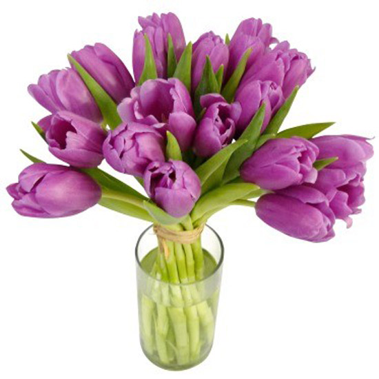 Tulips - Purple