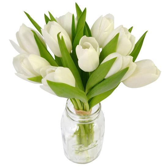 Tulips - White