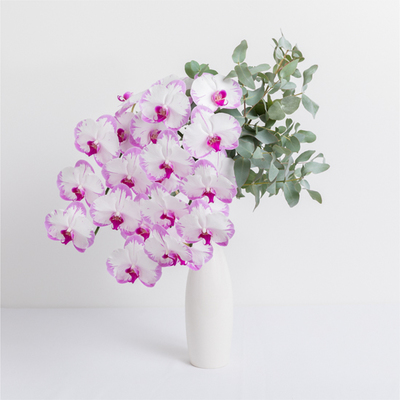 Phalaenopsis Orchids Delivery